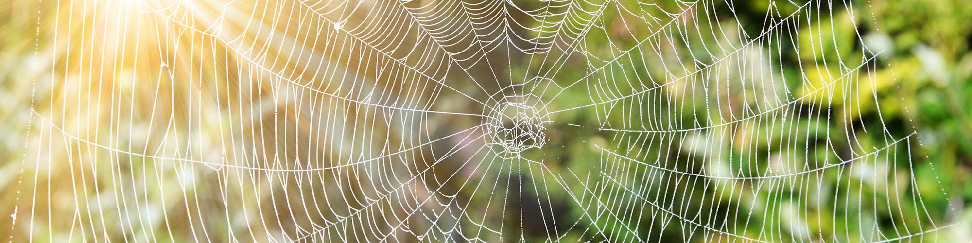 Web macht erreichbar